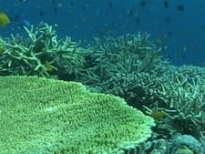 海洋紀行 竜宮城めぐり 珊瑚礁のワルツ