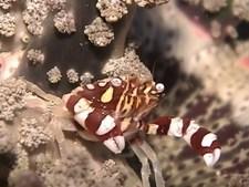 海洋紀行 竜宮城めぐり 原色の生き物たち