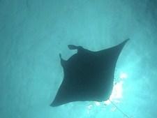 海洋紀行 竜宮城めぐり 巨大魚群と海の大物たち
